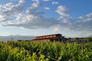 Van Ardi vingård